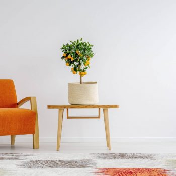 Tropical accent in stylish, minimalist interior with retro furnitures